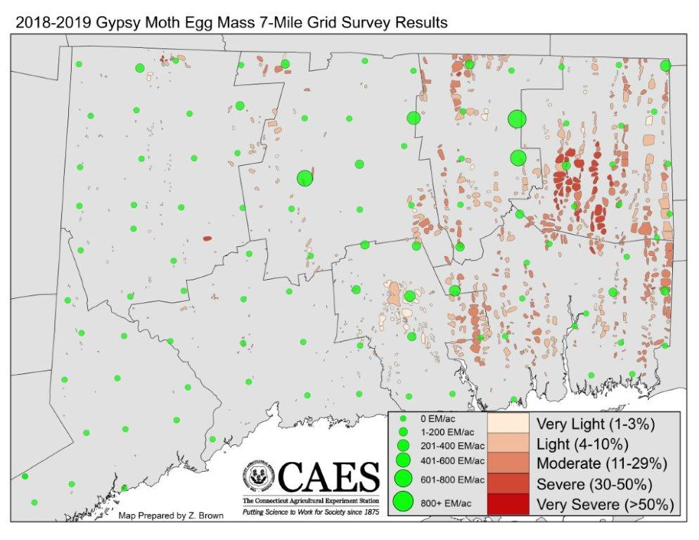 2018-2019 Egg Mass Survey