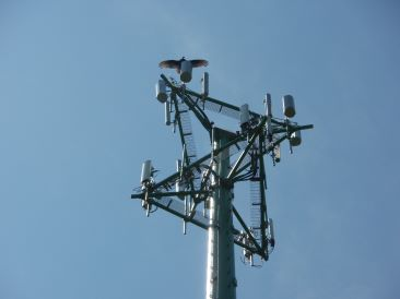 Top of Telecommunications Monopole with vulture on antenna mount