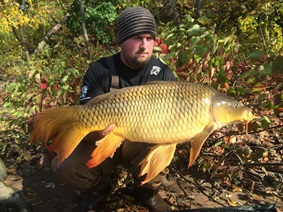 fantail_version_of_common_carp