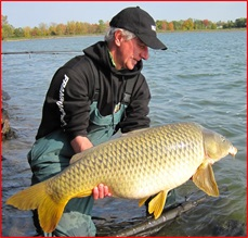 common_carp_image