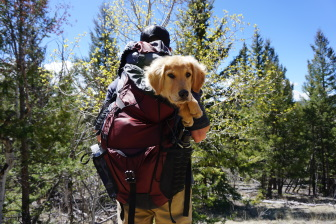 Man hiking with dog in backpack
