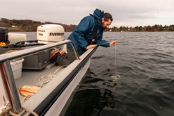 An individual lowers a secchi disk from the side of a boat to measure lake water clarity.