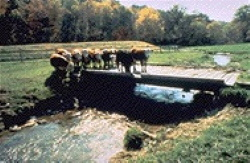 Image of cattle crossing stream