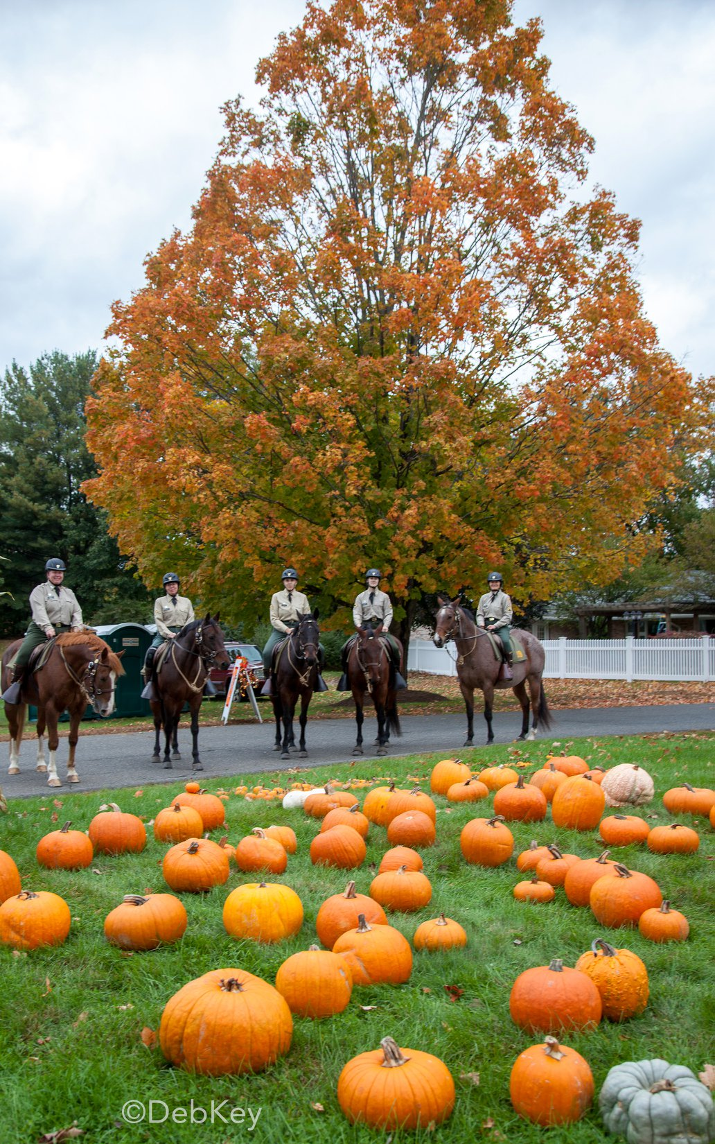 image is of troopers riding horses with a fall tree and pumpkins