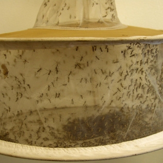 Mosquito light trap