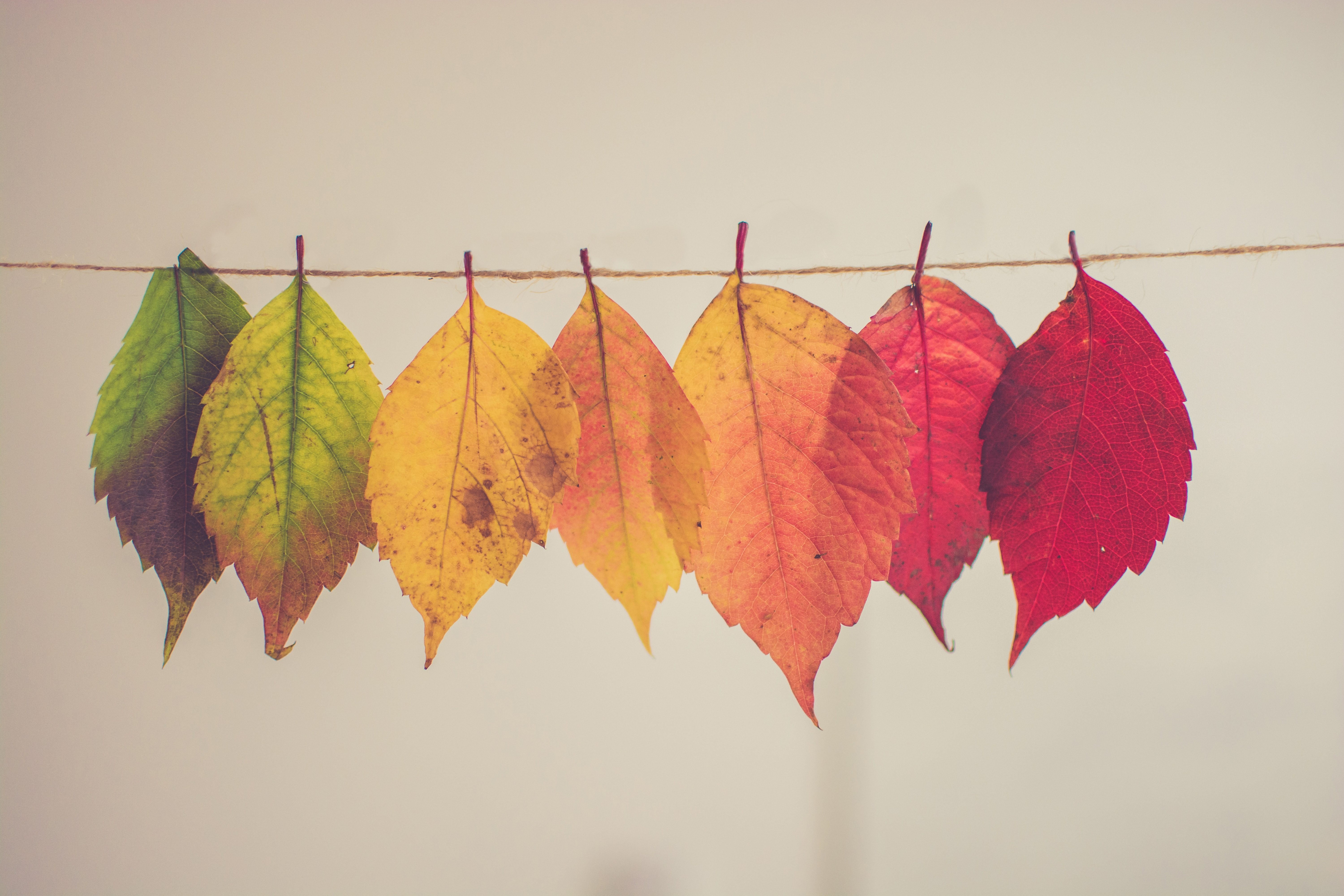 colorful hanging fall leaves