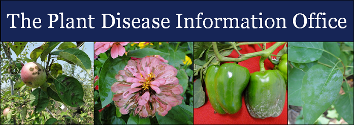 The Plant Disease Information Office