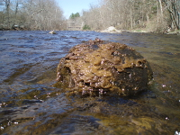 Didymo is a threat to trout streams.