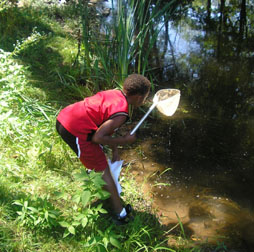 Boy using net to collect pond insects.