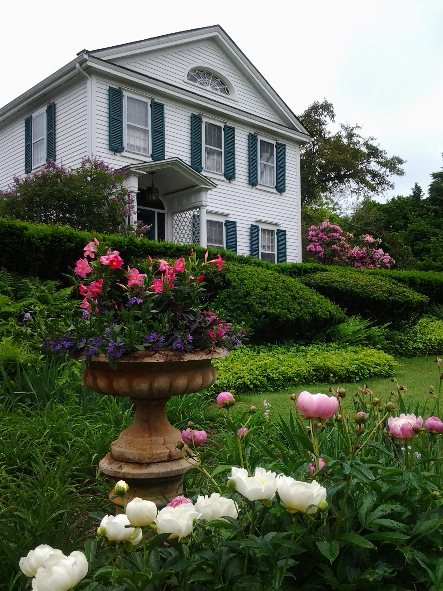 peonies in front of house