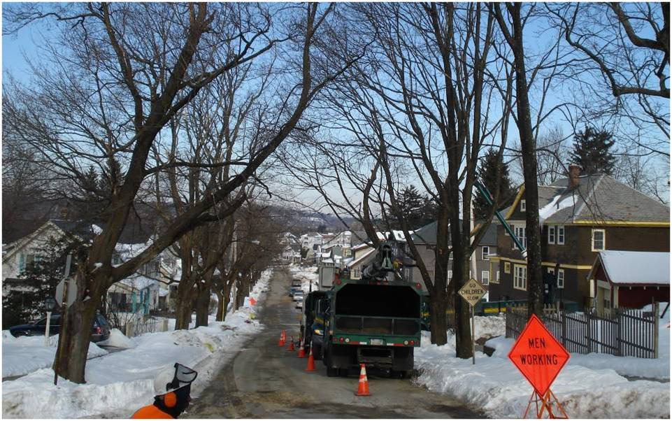 Worcester street before removal of trees due to Asian longhorned beetle