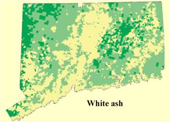 ash distribution in CT