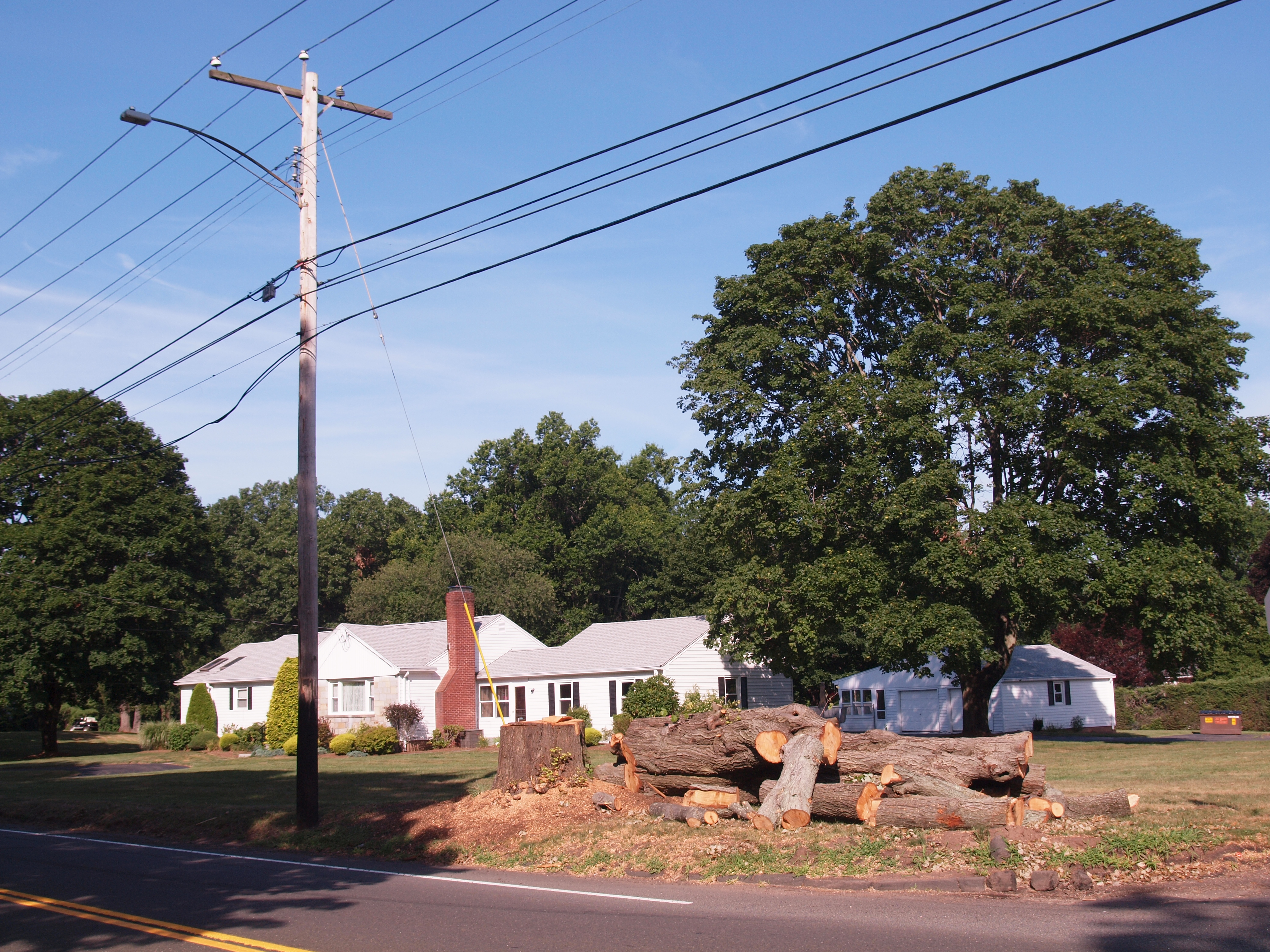 North Haven Tree removed from under the utility wires
