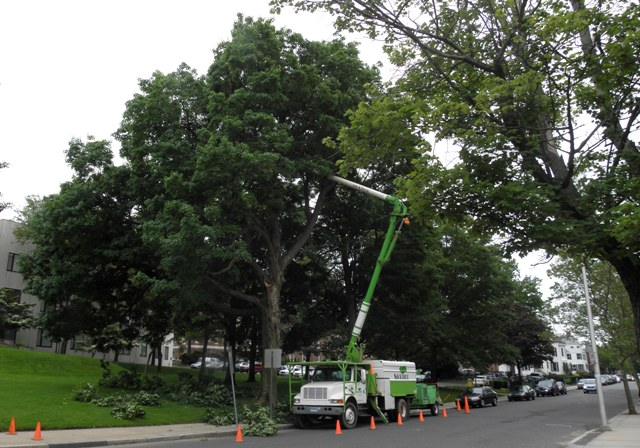 Tree maintenance in Connecticut