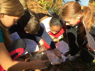 student volunteers looking for macroinvertebrates