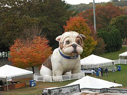 Yale Bulldog with Surrounding Recycling Bins