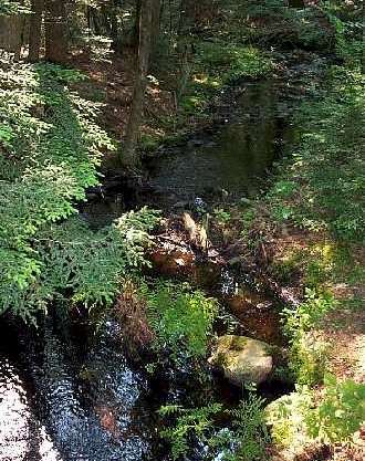 A stream in Nipmuck State Forest