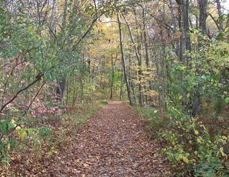 The old road to the former camp is now a well-defined forested path that leads into the depths of the 592 acre park.