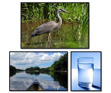 photos of heron, boat on water, glass of water