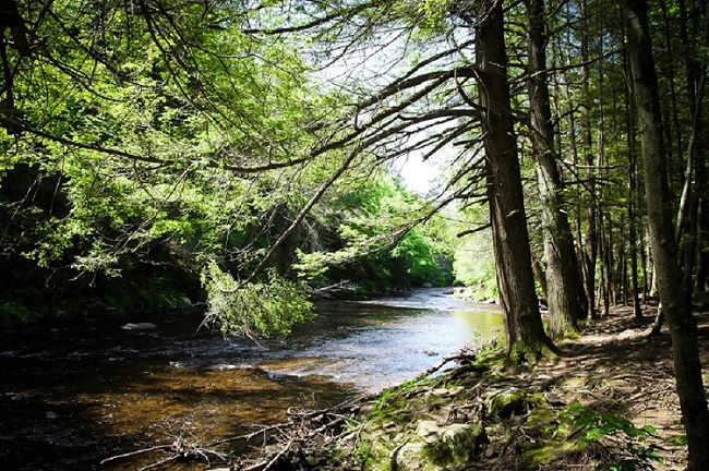 Salmon River, Colchester, CT