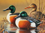 2015 Connecticut Duck Stamp