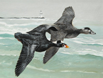 2018 Connecticut Duck Stamp