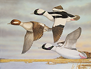 2019 Connecticut Duck Stamp