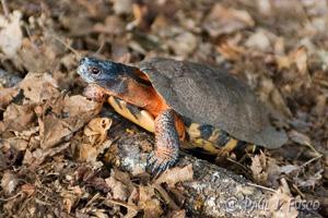 Turtle din lemn