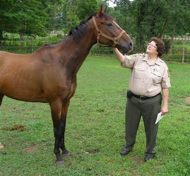 Officer with recovered healthy horse