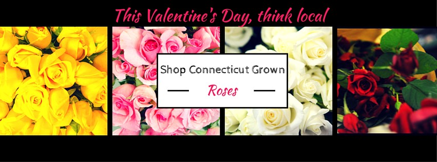 shop for ct grown roses