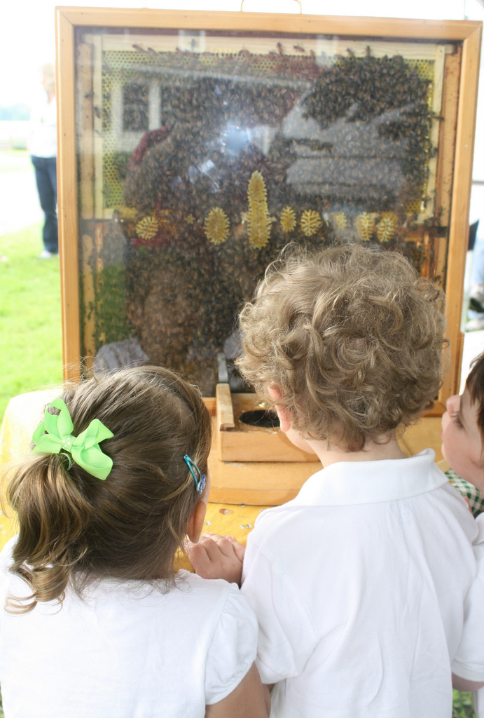 kids looking at observation hive