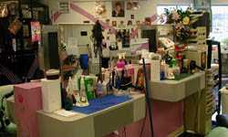 Cosmetology is a popular vocational program with good employment potential.