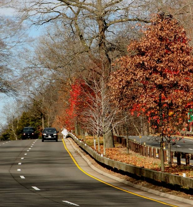 Merritt Parkway Landscaped Median (Autumn)