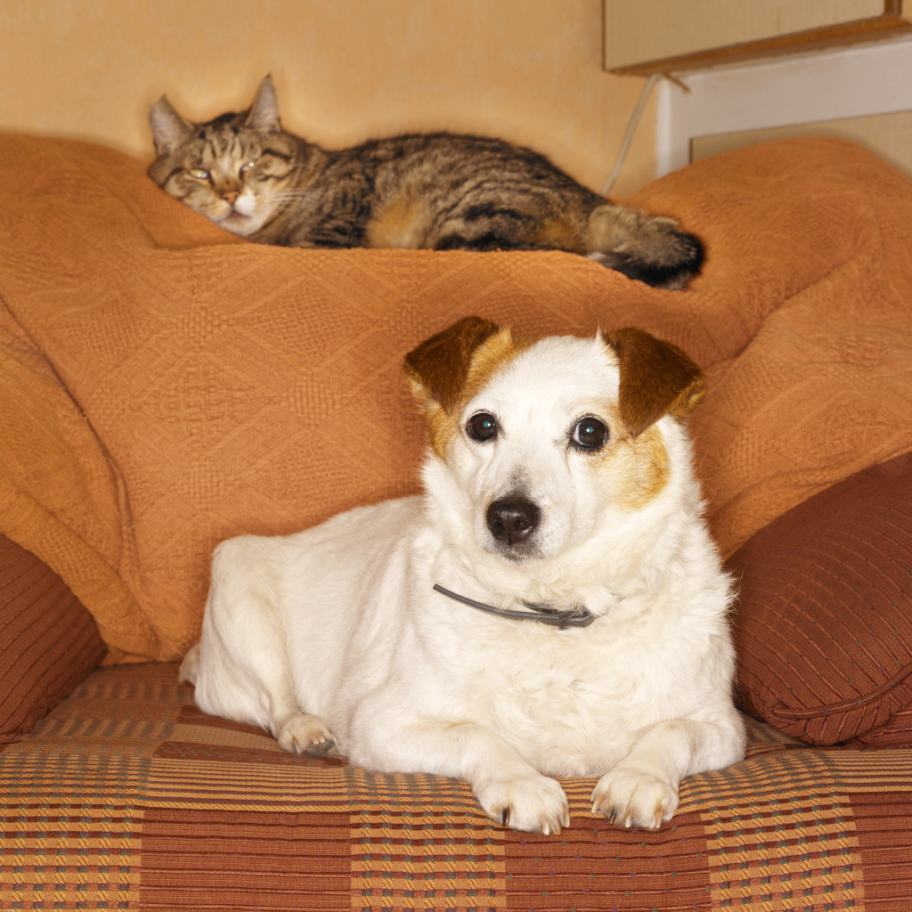 dog and cat on sofa