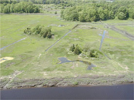 Aerial view of a marsh