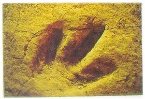 Picture of The State Fossil
